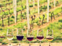 Tour de viñedos en Francia 4 días espectaculares