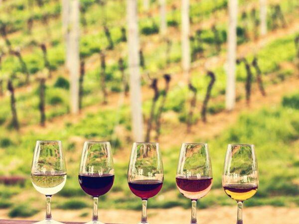 Tour de vinos 4 días en Bordeaux Francia